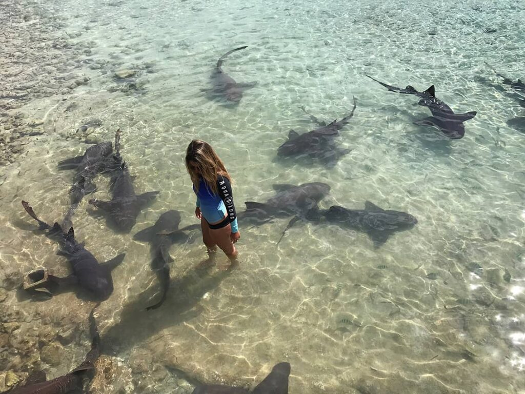 Diving with sharks is safe. Nurse sharks in shallow water